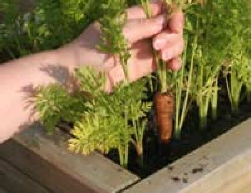 Why Grow Your Own Fruit and Vegetables?
