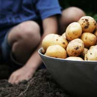 Grow Your Own Root Vegetables