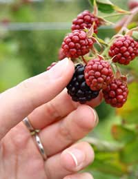 All about Foraging
