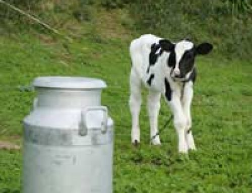 Keeping Cows and Livestock