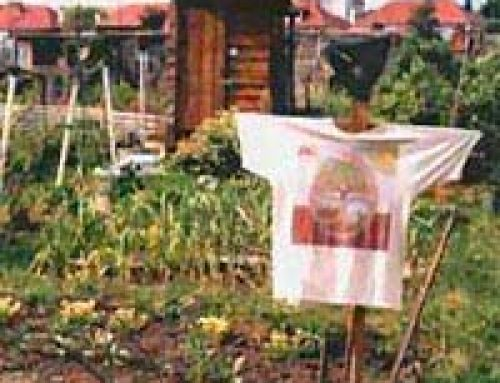 History of Allotments