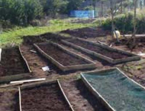Our First Year in the Allotment: A Case Study
