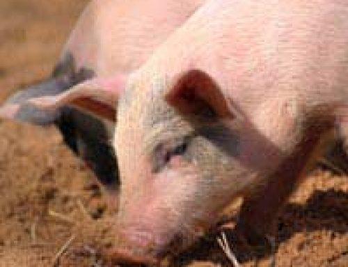 Keeping a Pig