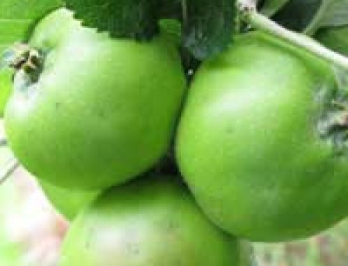 Grow Your Own Apples and Pears