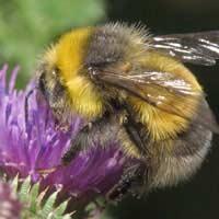 Beginner's Guide to Bee Keeping